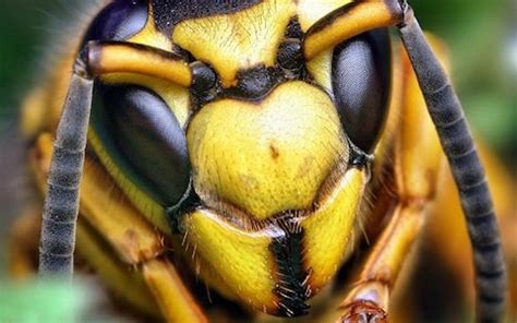 Stop killing wasps, say scientists, they're just as